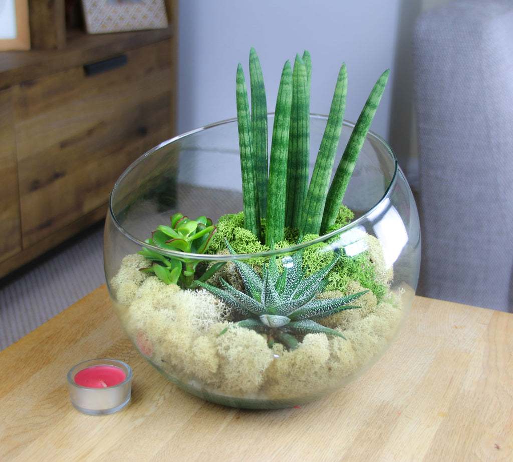 Shades of Moss Terrarium with Angled Glass Bowl