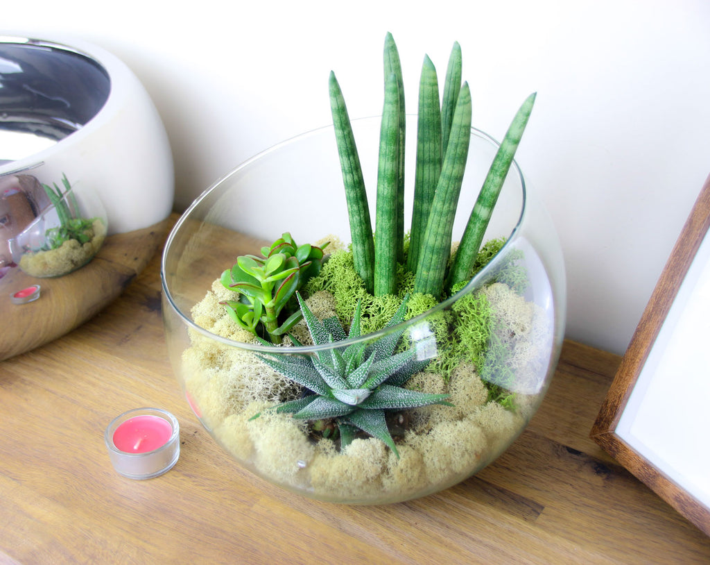Terrarium Kit for sale in the UK, home accessory