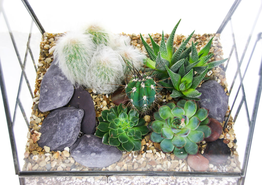 Succulent and cactus terrarium design ideas