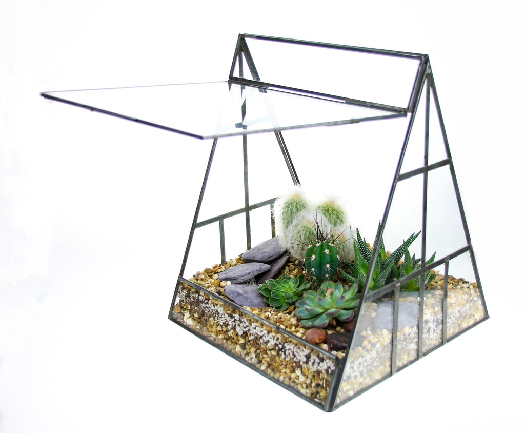 Enclosed greenhouse terrarium
