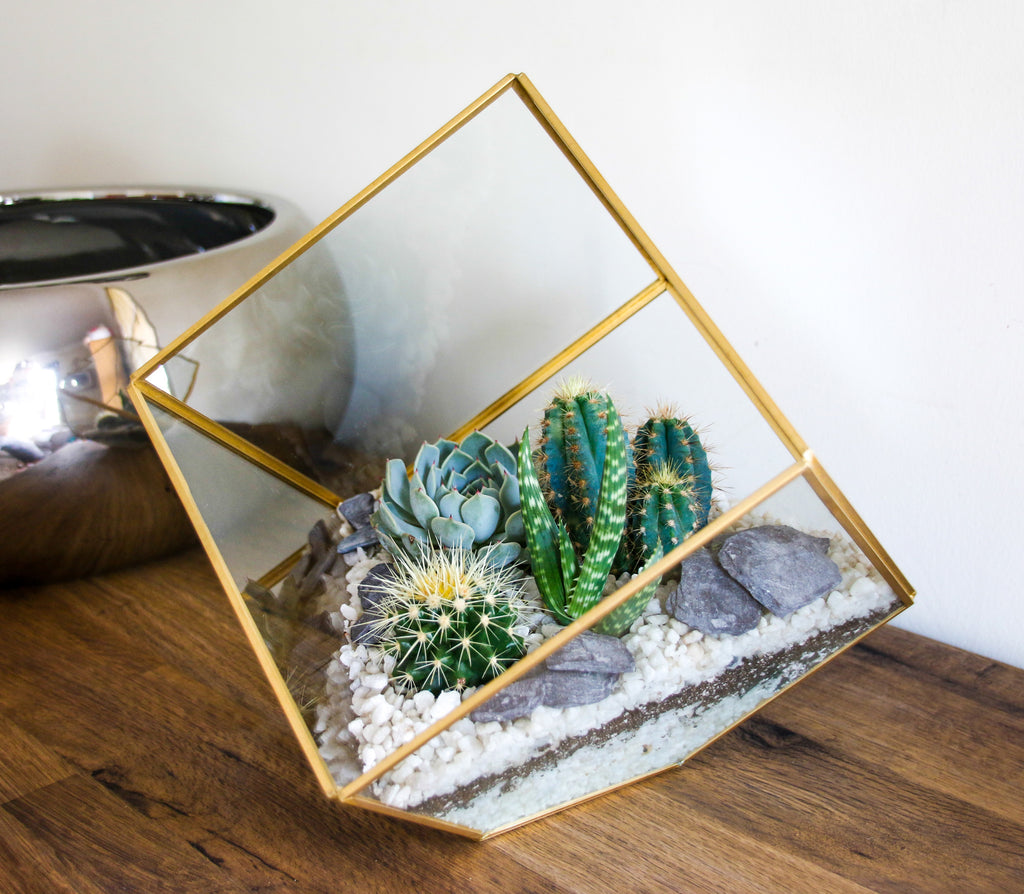 Large Geometric Cube Terrarium with Succulents and Cacti