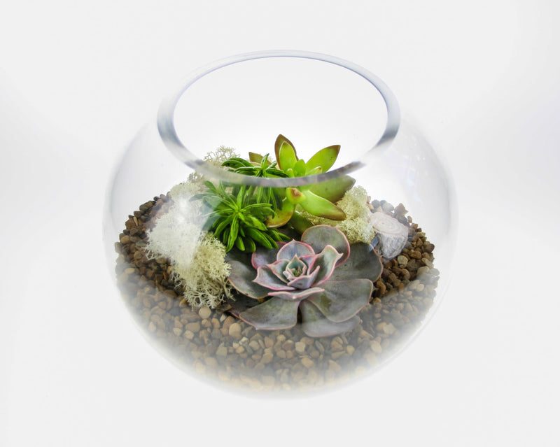 DIY terrarium kits in the UK