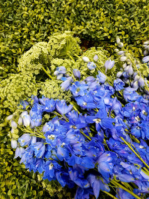 July Spotlight: Delphiniums by the Dozen