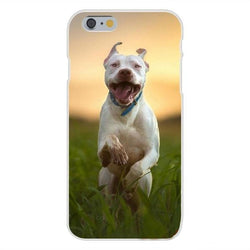 Pit Bull Jumping Sunset Phone Case for iPhone