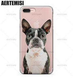 Black White Boston Terrier Looking Straight Phone Case for iPhone