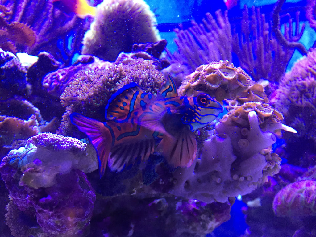Tank Mates for Seahorses-Saltwater Fish