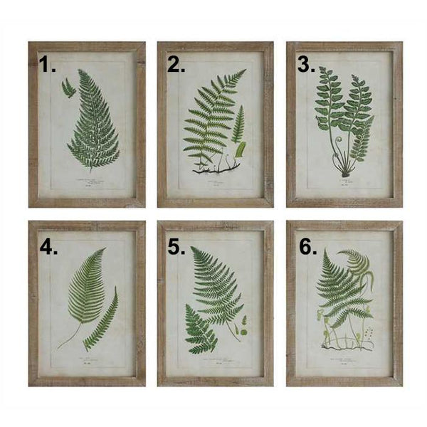 Framed Botanical Fern Prints - City Home - Portland Oregon - Furniture and Home Decor