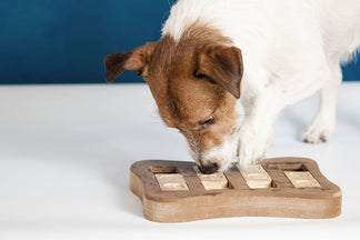 image for Can You Measure Your Dog's Intelligence?