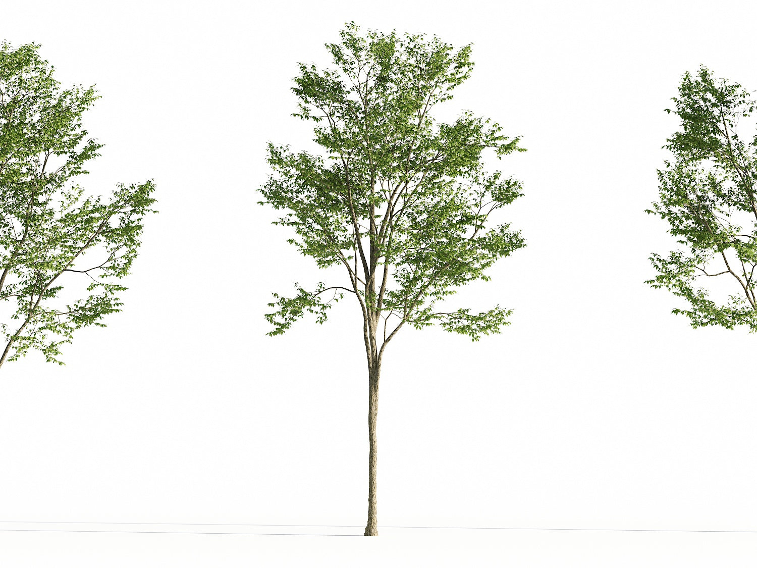Broadleaf Tree Set - Nouvelle Mesure Lab