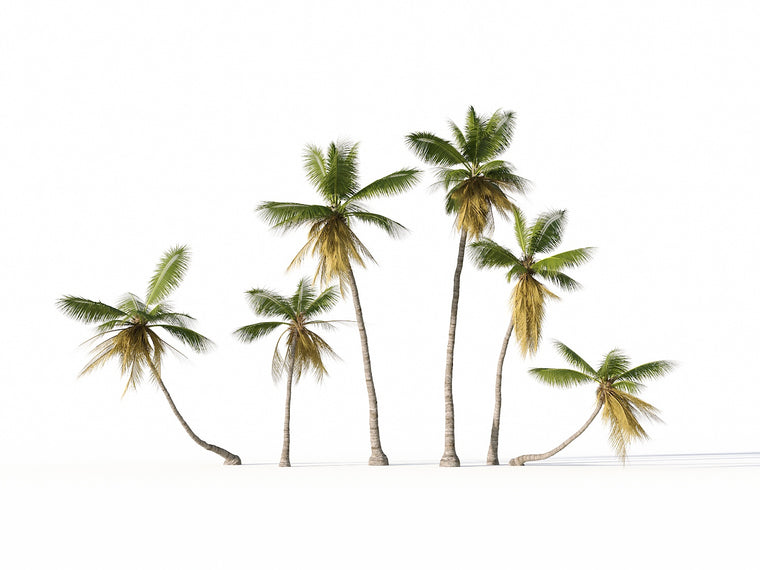Coconut Tree Set