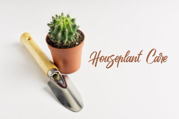 First Base: Houseplant Care Guide