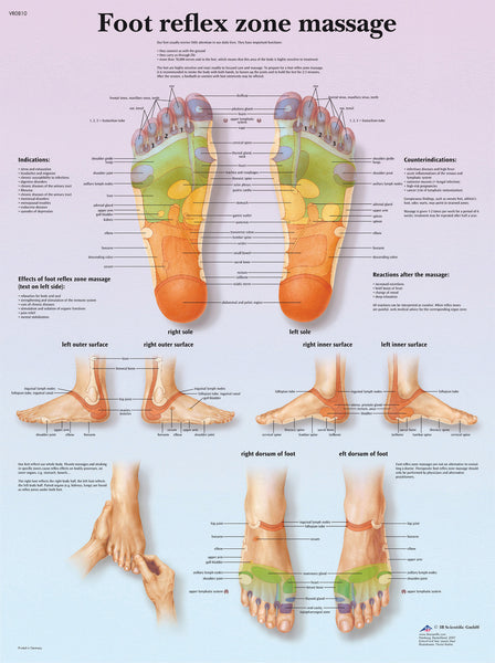 Anatomical Chart - foot massage, reflex zone, paper