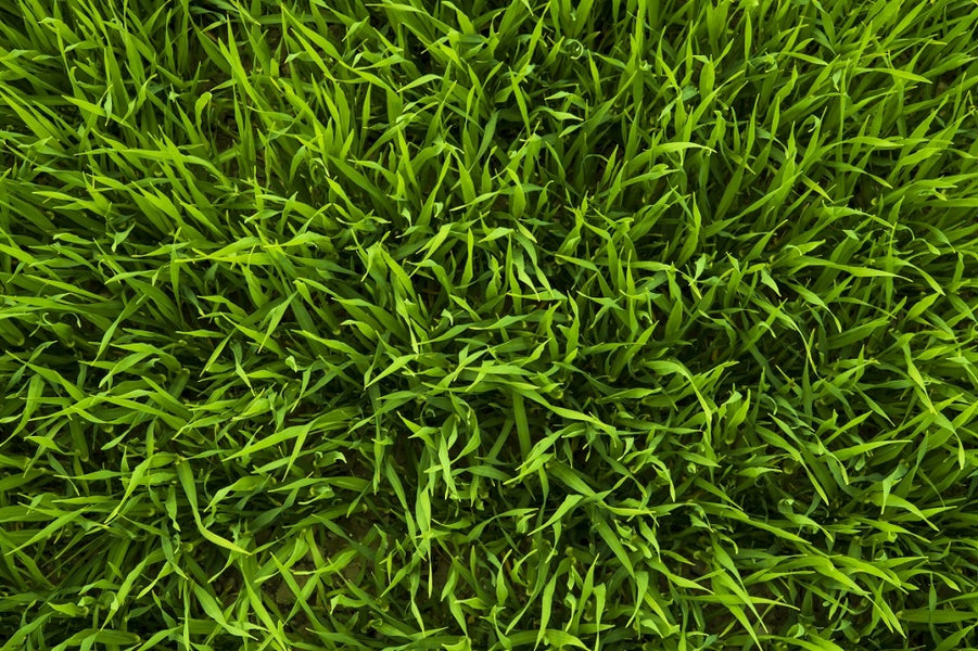 Is Your Artificial Turf Melting? Your Window Could be the Culprit