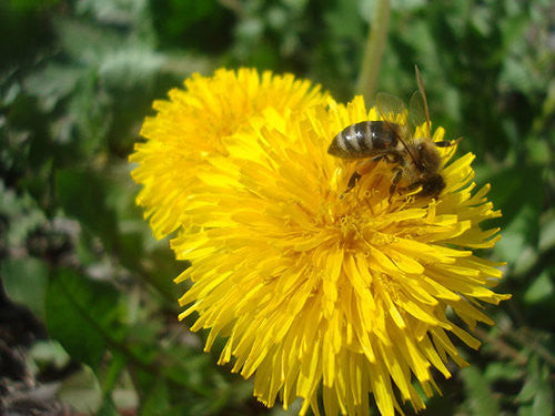 Kill weeds without killing bees