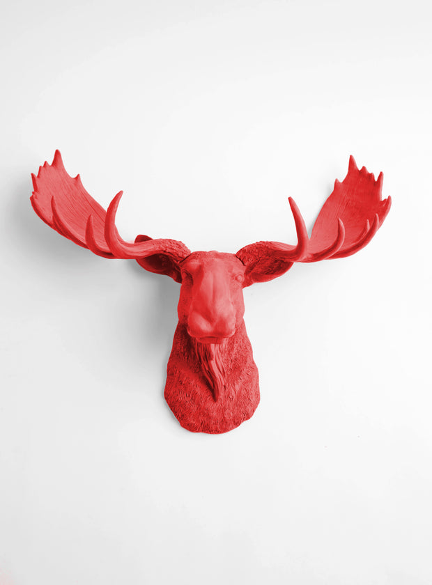 Red Moose Head Wall Hanging by White Faux Taxidermy. The Rosie