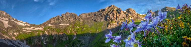 FLOWERS IN BLOOM ON A MOUNTAIN