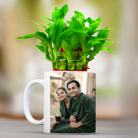 Lucky Bamboo in a Printed Mug - Zestpics