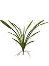 "Cymbidium Orchid Leaves - 26"" Wide - Box of 12 - Green"