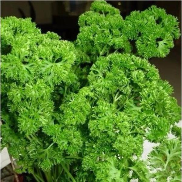 Parsley Vegetable Seeds