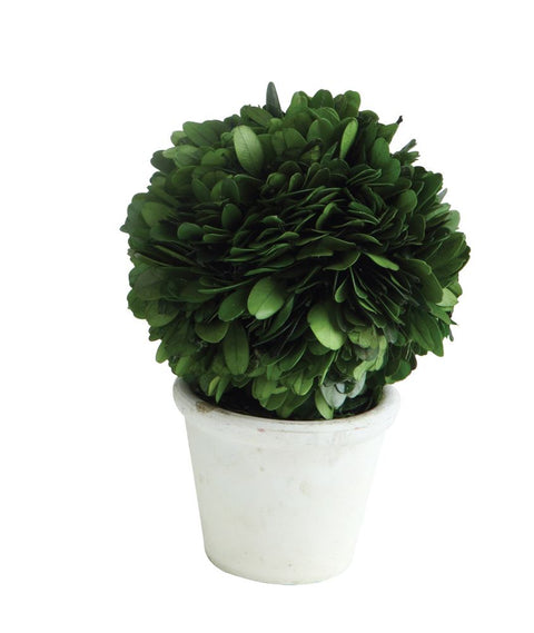 small round preserved boxwood topiary ball in pot