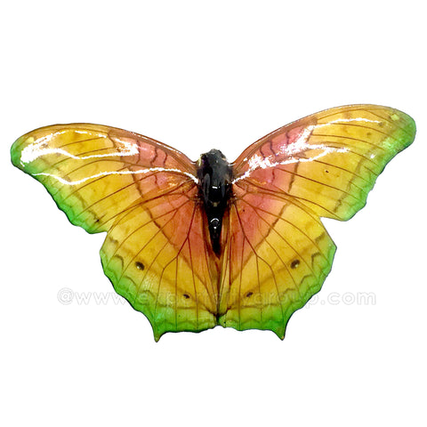 Real Butterfly Jewelry Pendant (BTF-040)