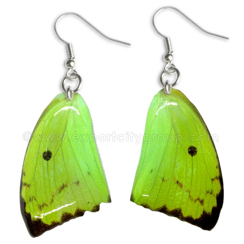Real Butterfly Wings Jewelry Earring - WG05 Dyed Green
