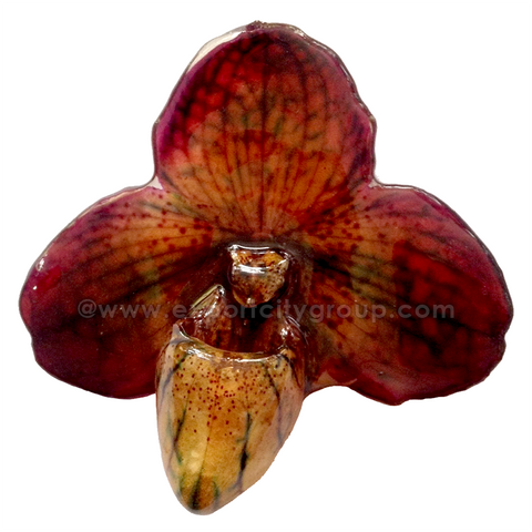 Paphiopedilum Concolor Orchid Jewelry Pendant (Brown)