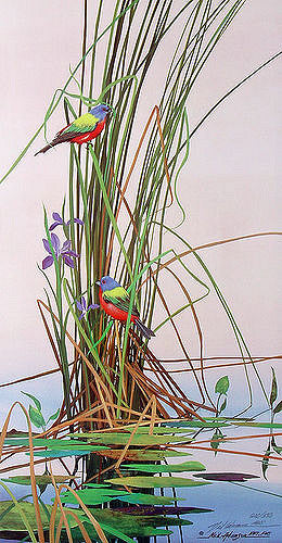 Adamson-Neil-Painted-Buntings