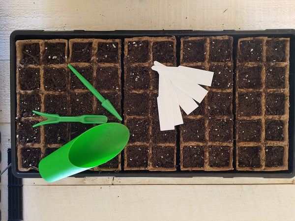 A step-by-step guide to starting basil seeds in Daniel's Plants biodegradable peat pot trays