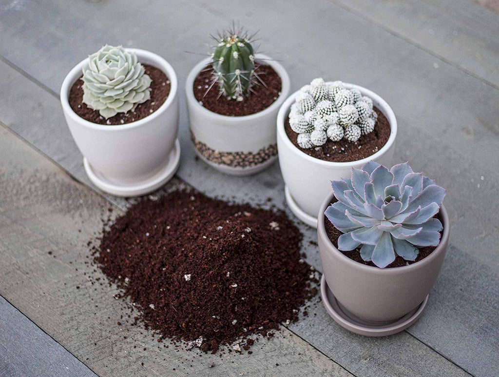 Transplant Kit and Potting Soil for Growing Cacti and Succulents | Bonus Transplant Scoop