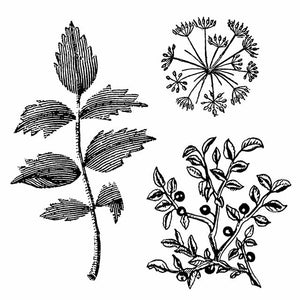 NEW Stamperia Natural Rubber Stamps 10 by 10cm - Herbarium WTKCC150