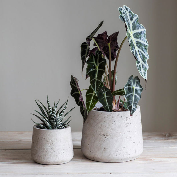 Tapered Cement Plant Pot