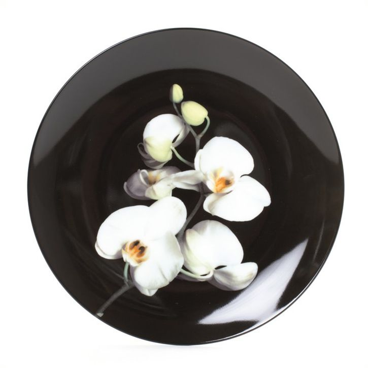 Orchid Plate by Robert Mapplethorpe