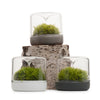Sanctuary S Rainforest Terrarium - White