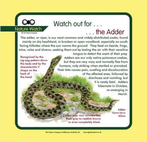 'Adder' Nature Watch Panel