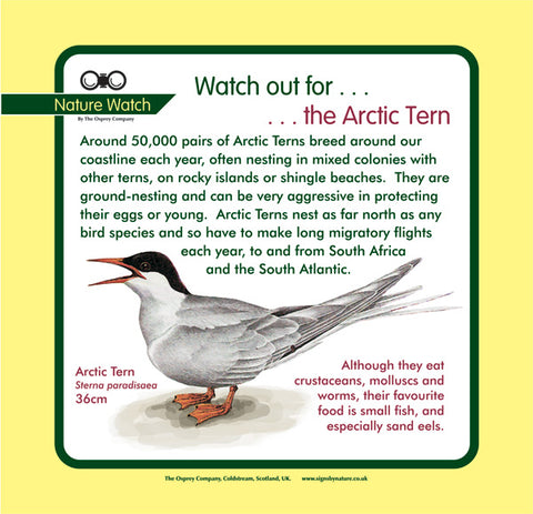'Arctic tern' Nature Watch Panel
