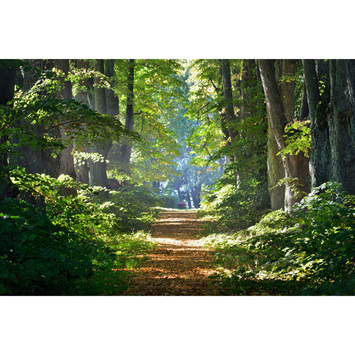 Forest Trees Nature Wall Mural - Premium-Creative Wallpaper