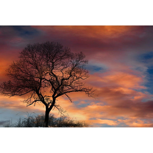 Dramatic Sky Nature Wall Mural - Premium-Creative Wallpaper
