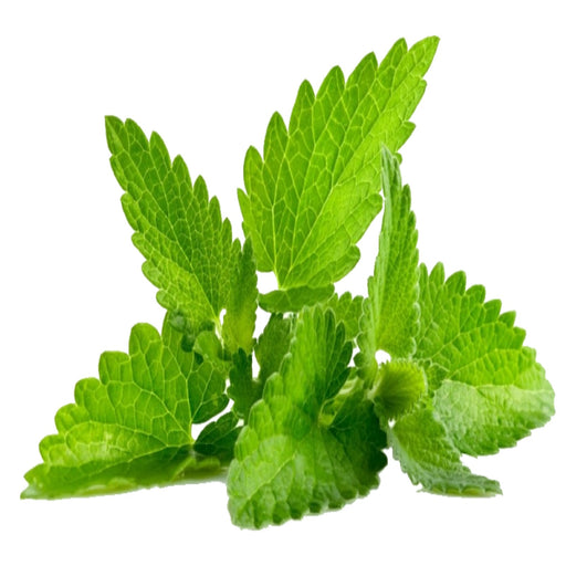 Spearmint ( 100ml )