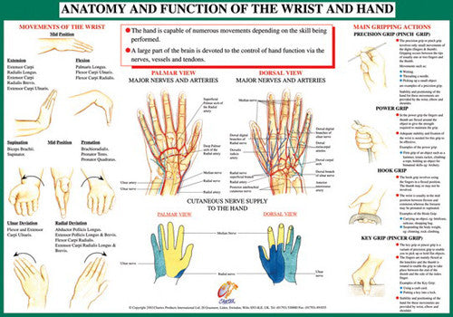 Anatomy of Hand and Wrist Health and Fitness Wall Chart Poster - Chartex Ltd.