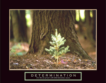 "Little Pine Tree ""Determination"" Motivational Poster - Front Line"