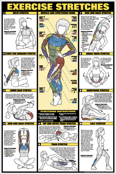 Women's Exercise Stretches Professional Fitness Wall Chart - Fitnus Corp.