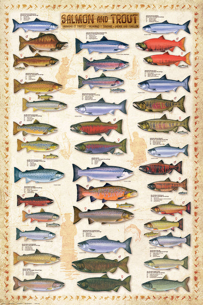 Salmon and Trout Fishing Wall Chart (17 Species) Poster - Eurographics
