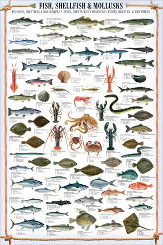 Fish, Shellfish and Mollusks Wall Chart Poster (66 Species) Poster - Eurographics