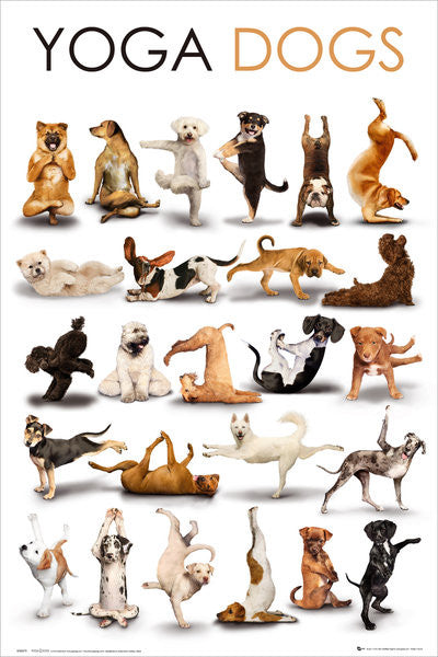 Yoga Dogs (Dogs Holding Yoga Positions) Poster - GB Eye Inc.