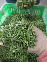 Hand picked and selected Qinba Wu Hao Tea. 38,000 buds to make 400 grams