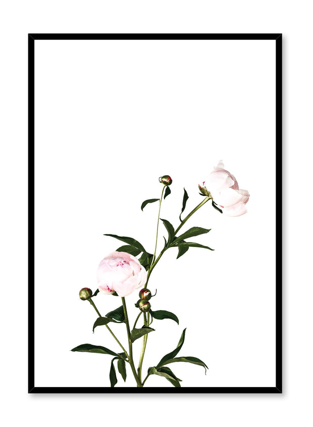 Scandinavian poster by Opposite Wall with trendy art photo of peonies - Romance