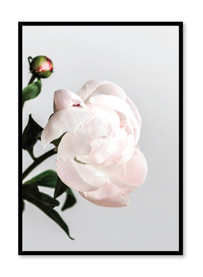 Modern minimalist poster by Opposite Wall with Blossom paeonia photography