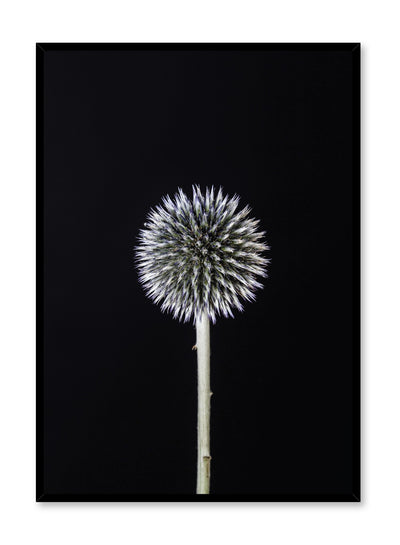 Scandinavian art print by Opposite Wall with Silver White Thistle art photo