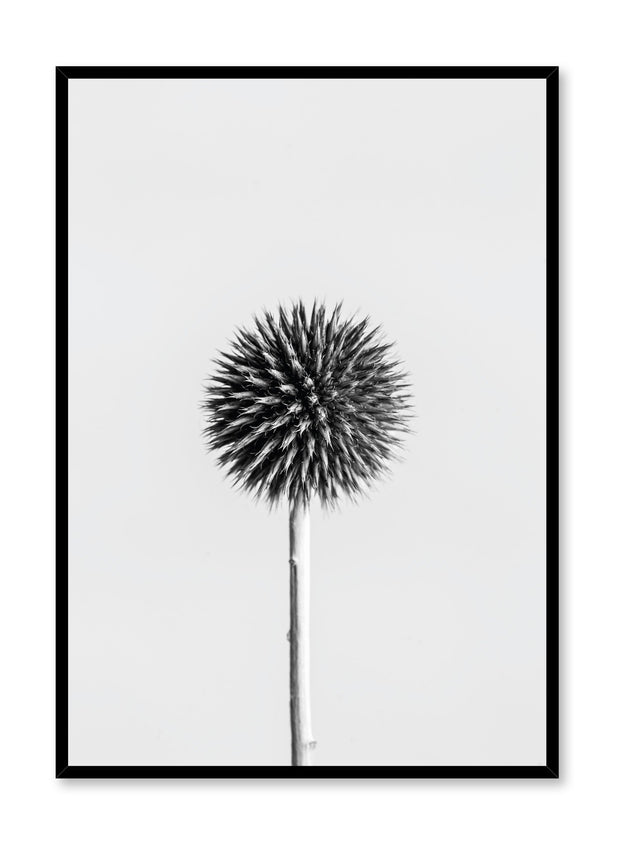 Scandinavian poster by Opposite Wall with Silver Thistle black and white art photo